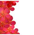 Pink Frangipani Frame vector image