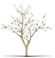 cotton tree vector image