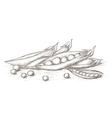 Hand drawn pea vector image