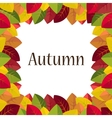 Autumn leaves on a white background vector image