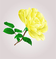 Yellow rose stem with leaves and blossoms i vector image