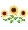 sunflower cartoon icons set vector image