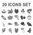 herb and spices monochrome icons in set collection vector image