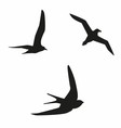 Sea birds vector image