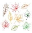 Leaves sketches set Hand drawn vector image vector image