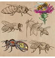 bees beekeeping and honey - hand drawn pack 2 vector image