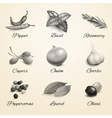 Herbs and spices black and white set vector image