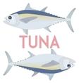 Tuna fish Cool vector image