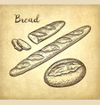 baguette and rustic bread vector image