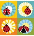 Ladybugs in flower flat style on color background vector image