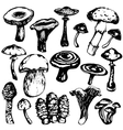 Collection of mushrooms vector image