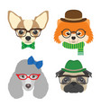 set of dogs portraits chihuahua pug poodle vector image