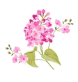 Purple Lilac flowers of Syringa vector image vector image