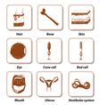 Human anatomy icon set vector image vector image