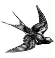 Swallow engraving vector image