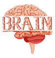Word brain on human brain vector image vector image