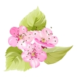 Sakura flowers Spring background vector image