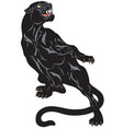 black panther tattoo vector image