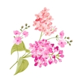Purple Lilac flowers of Syringa vector image