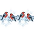 Red bullfinches on winter branches vector image