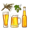 Set of beer bottle mug and glass malt hop vector image