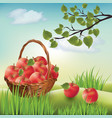 basket with apples landscape lawn apple tree vector image