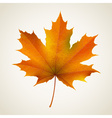 Single autumn maple leaf vector image