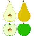 apple and pear vector image