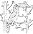Toucan coloring book for adults vector image