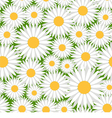 Camomiles pattern vector image