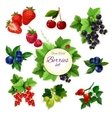 Berries Forest and garden isolated berry icon set vector image vector image