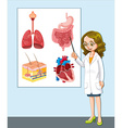 Doctor presenting different anatomy vector image