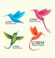 modern set  colorful birds colibri in flight vector image