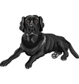serious dog breed vector image