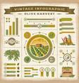 Vintage olive harvest infographic set vector image