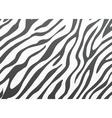 Backgrounds zebra skin vector image