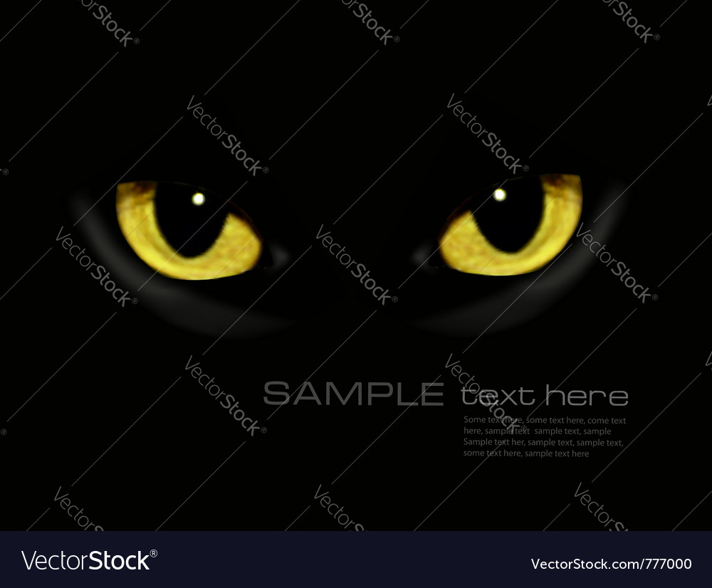 Cat eyes in dark night vector