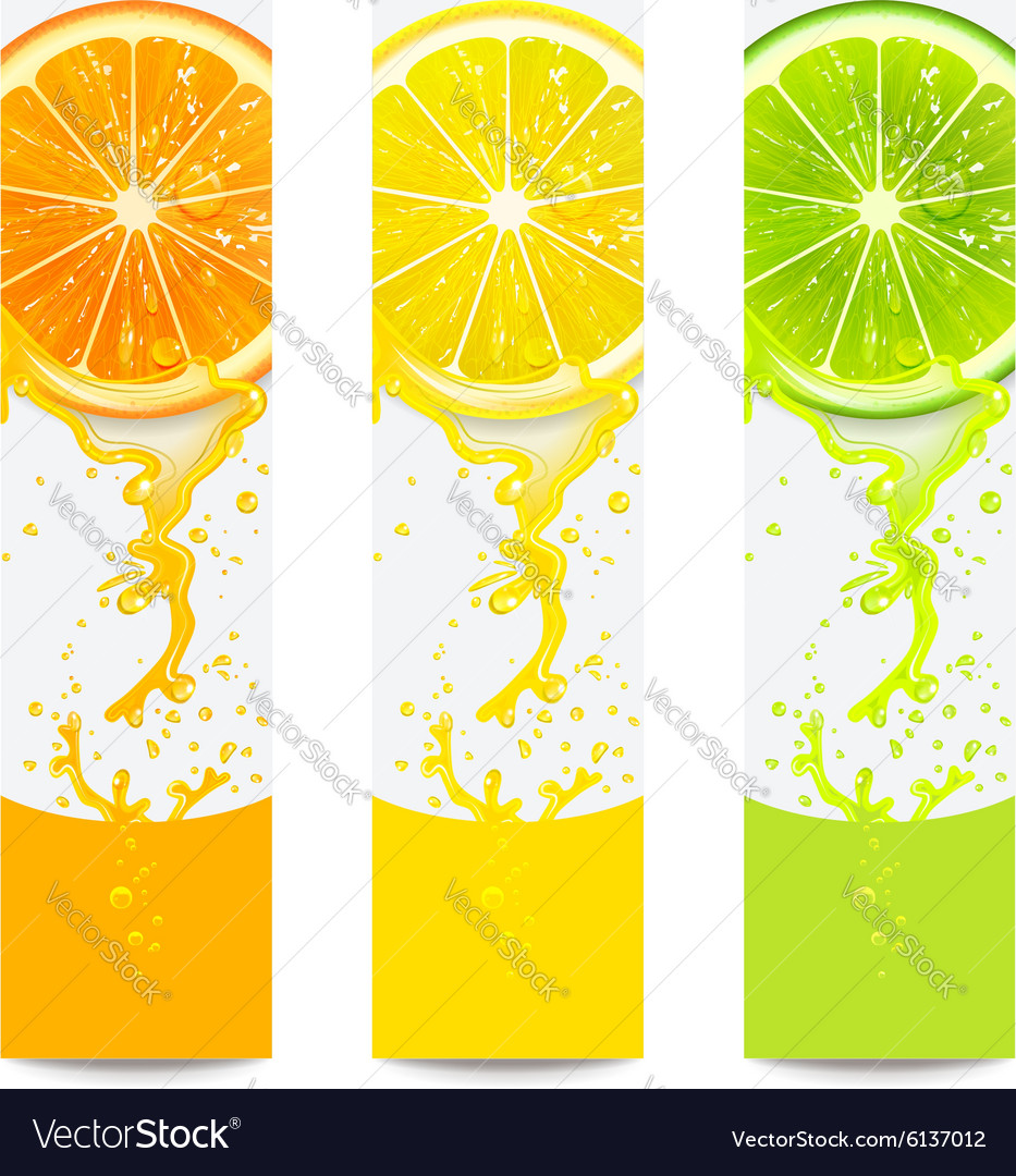 Banners with fresh citrus fruit vector
