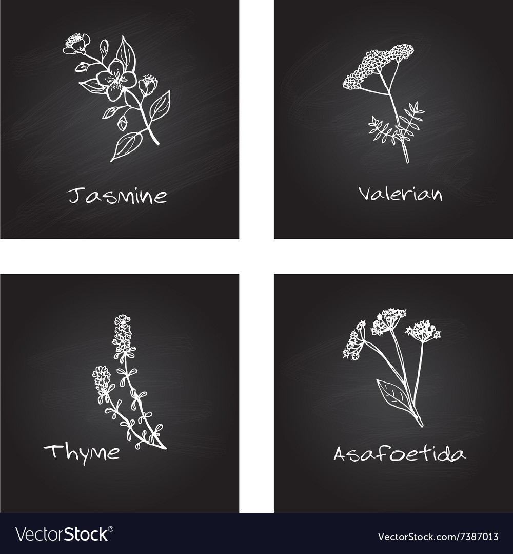 Handdrawn medicinal herbs  health and nature set vector