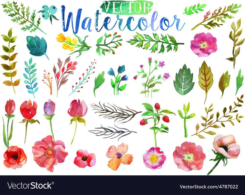 Watercolor aquarelle flowers and leaves vector
