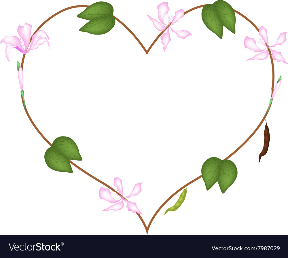 Pink bauhinia purpurea flowers in a heart shape vector