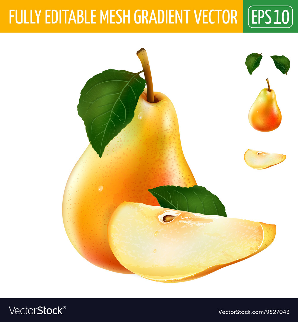 Pear on white background vector