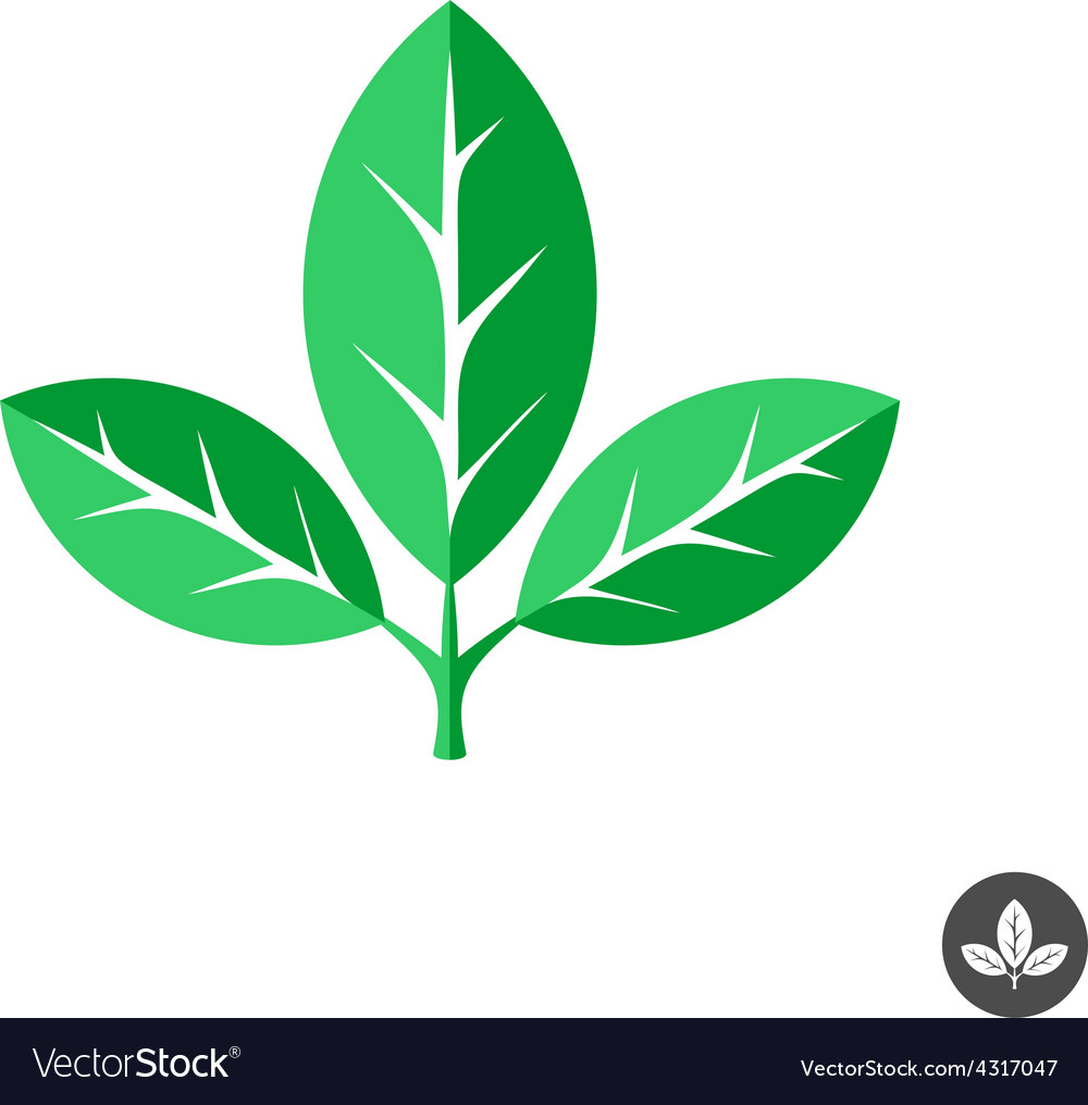 Three green leaves flat logo template vector