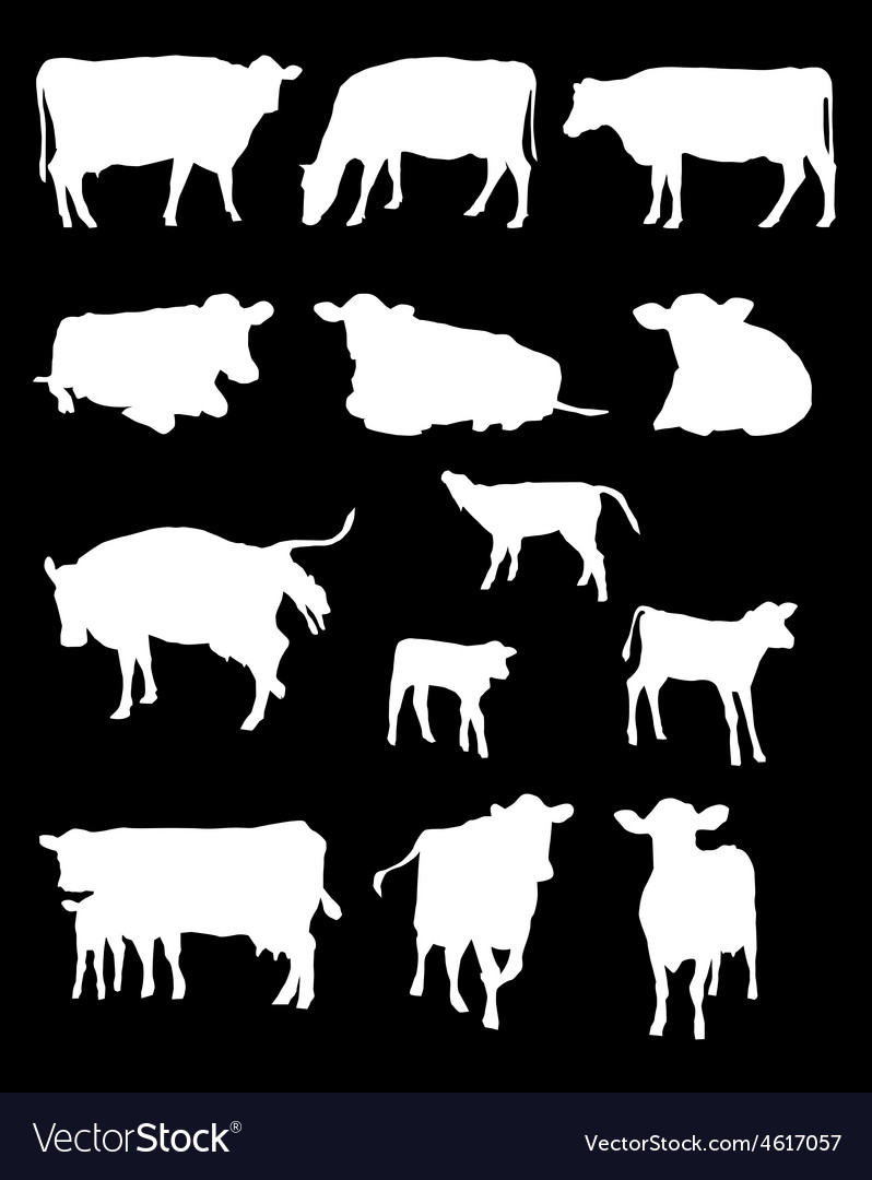 Cows silhouettes vector
