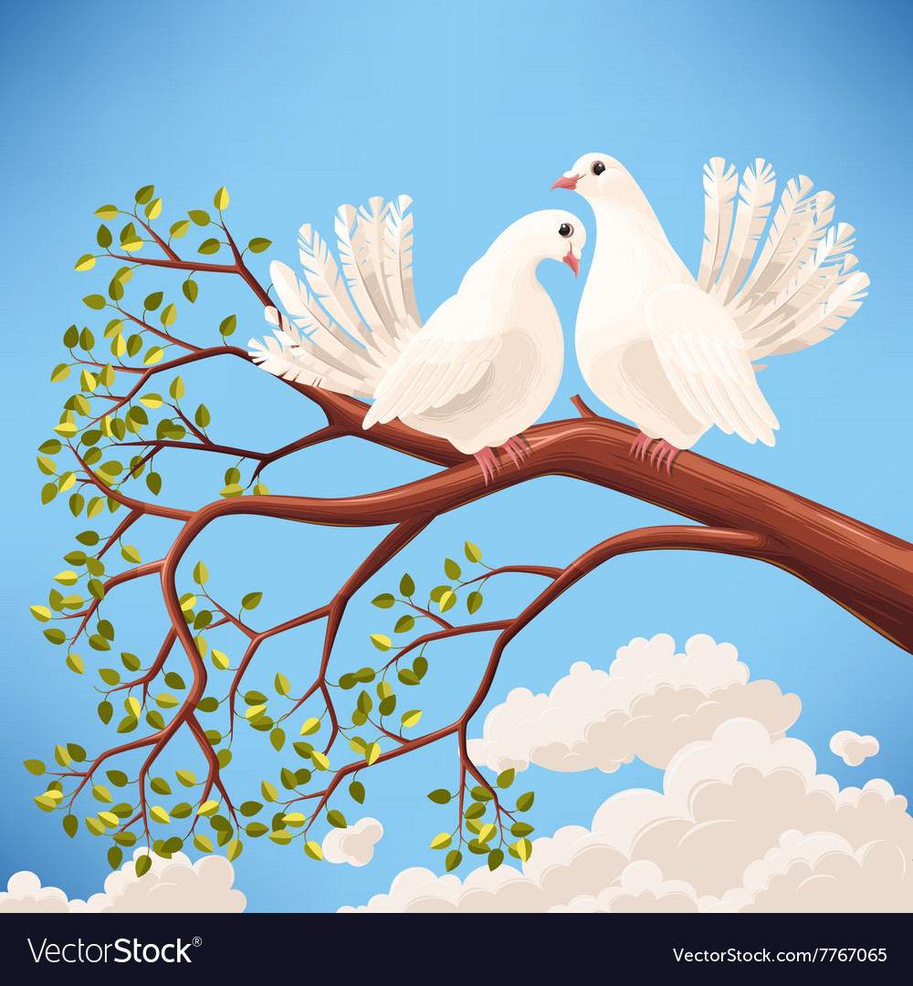 Two white doves on the branch vector