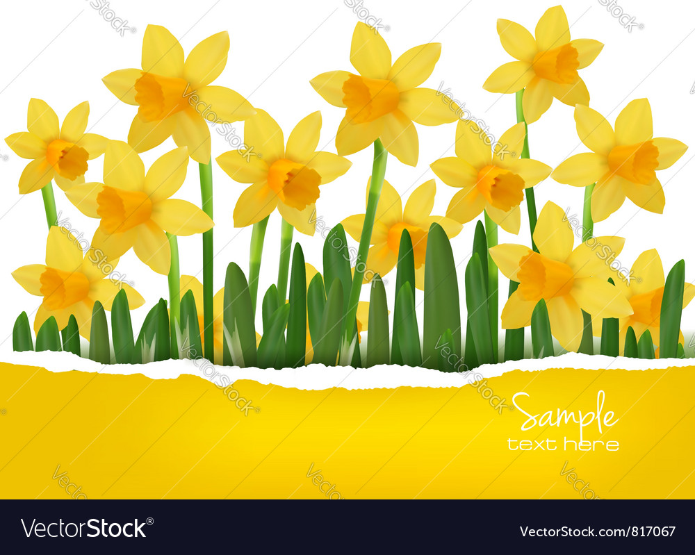 Yellow background with ripped papper vector