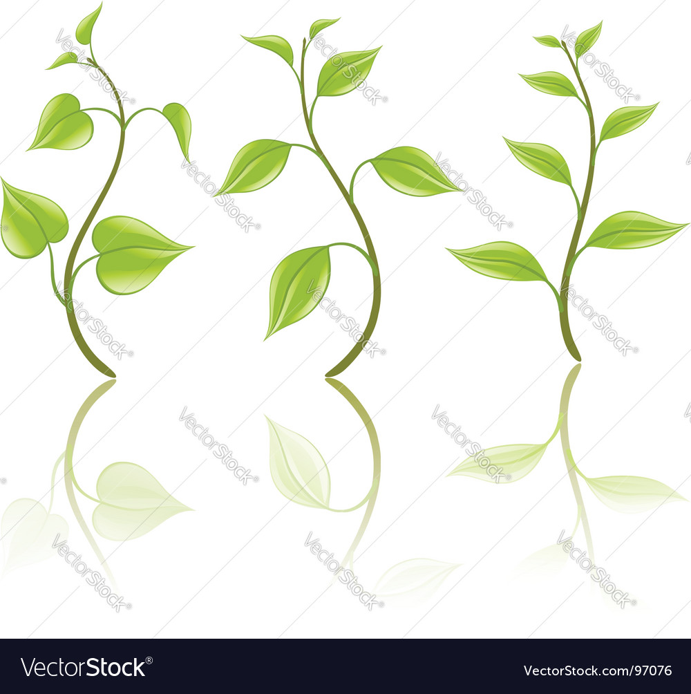 Branch design elements vector