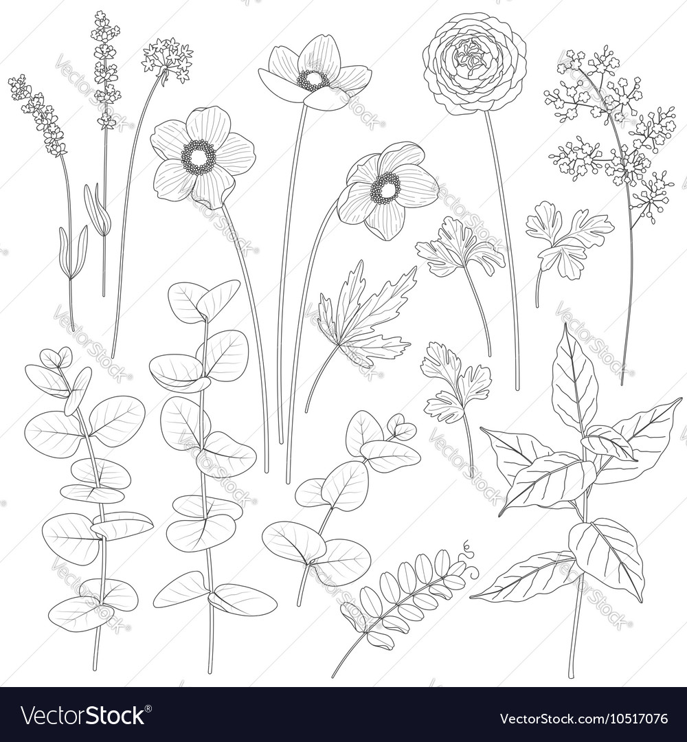 Flowers outline1 vector