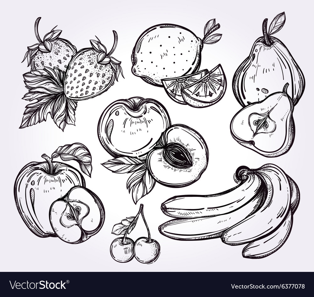 Various fruits set vintage linear style vector