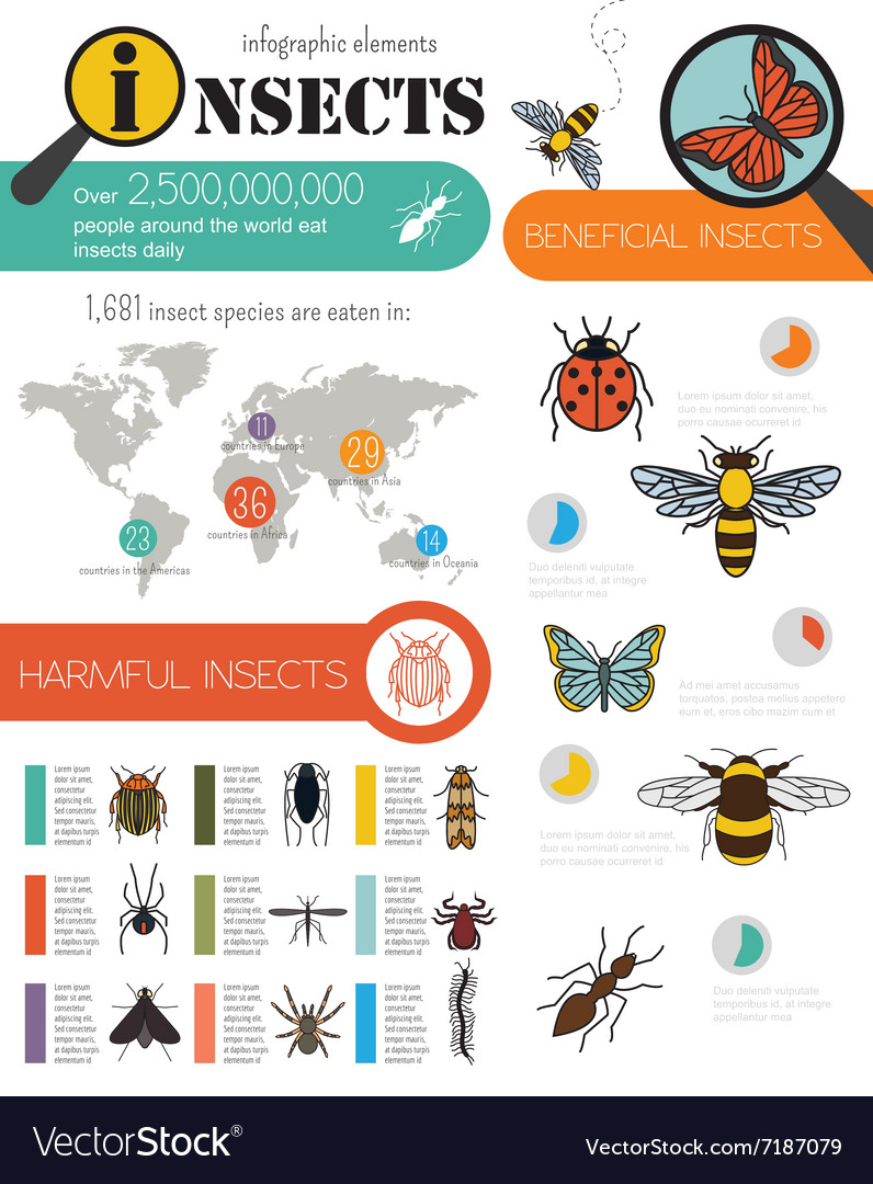 Insects infographic template vector